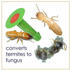 how to control termites at home in india