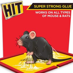 Hit rat glue pad