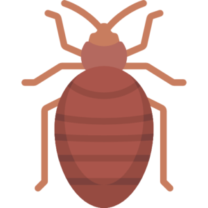 Best bed bug spray in India