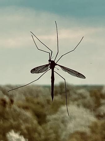 best mosquito killer in india