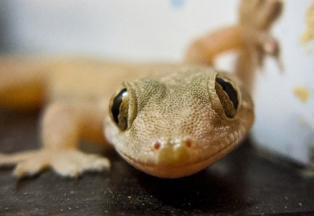 how to get rid of lizards home remedy