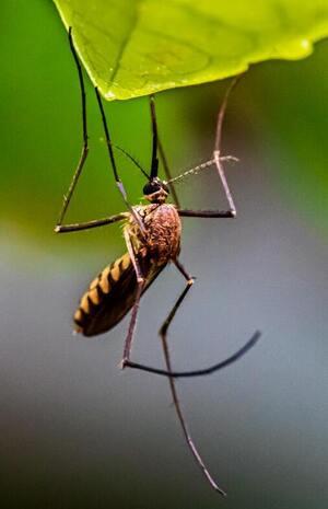 best mosquito killer for bedroom