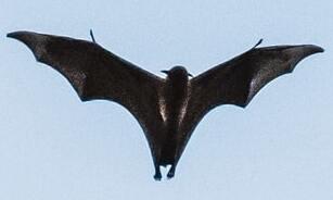 Bat Repellent in India